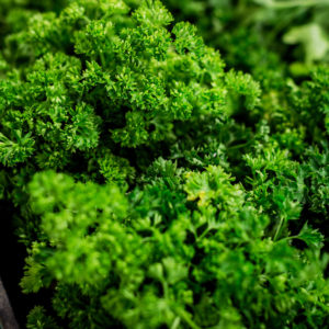 curly-parsley