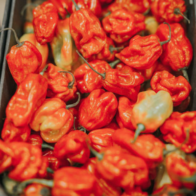 scotch bonnets chilli